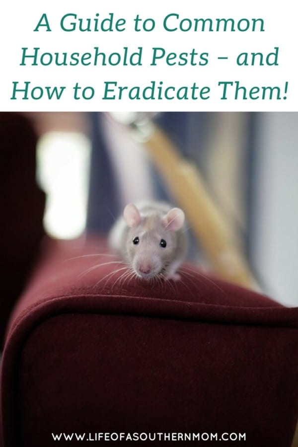 household pests and how to eradicate them
