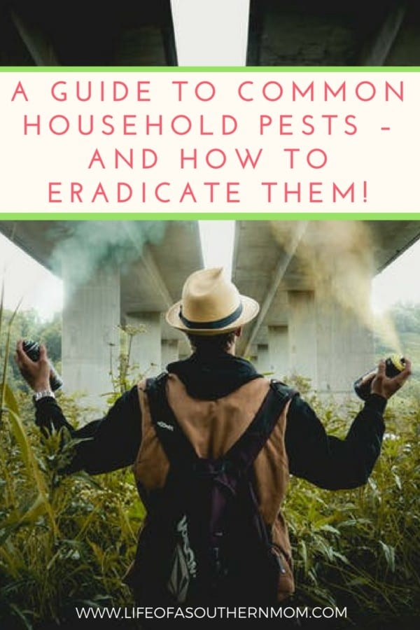 A Guide to Common Household Pests – and How to Eradicate Them!